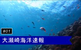 大瀬崎海洋速報
